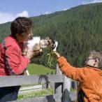 Krahbichlhof - Tiere
